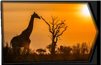 AFRICA ARROW